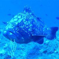 Idée Cadeau Atao Plongée Martinique : catamaran sous l'eau 2