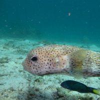 Idée Cadeau Atao Plongée Martinique : catamaran sous l'eau 7