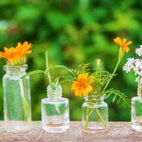 Idée Cadeau Espace Nature'L Harmonie Angoulême - les fleurs