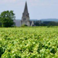 Idée Cadeau le secret des papilles à Saumur - cours oenologie la vigne 2
