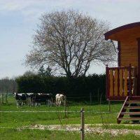 Idée Cadeau la Ferme des Chanaux Chomelix Roulotte et les vaches