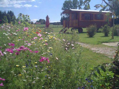 Idée Cadeau la Ferme des Chanaux Chomelix jardin en fleur et roulotte