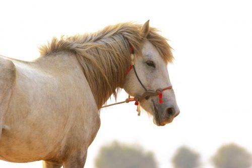 Idée Cadeau Les 3 Fers Saint-Raphael un cheval