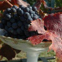Idée Cadeau Domaine de la Queyssie Saussignac - la vigne
