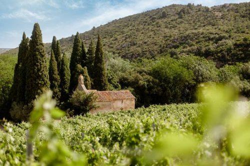 Idée Cadeau Chateau Haut Gleon Villesèque-des-Corbières - les vignes