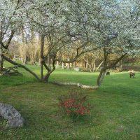 Idée Cadeau Moulin de la Diversiere Savigné-sous-le-Lude - le parc