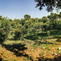 Idée Cadeau Villa Baulieu Rognes - la truffiere 2
